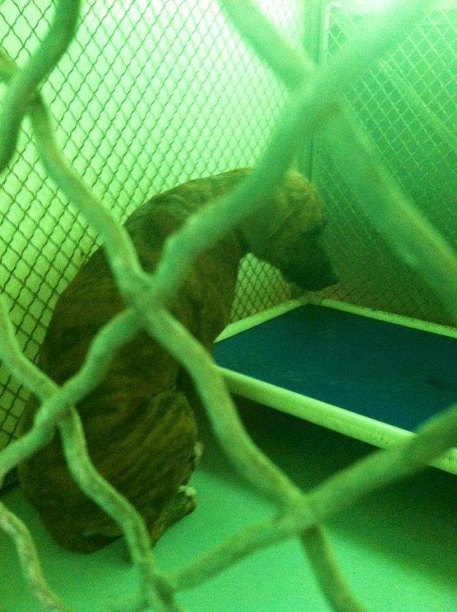 HELP US Change Brooks Animal Shelter in San Antonio Texas