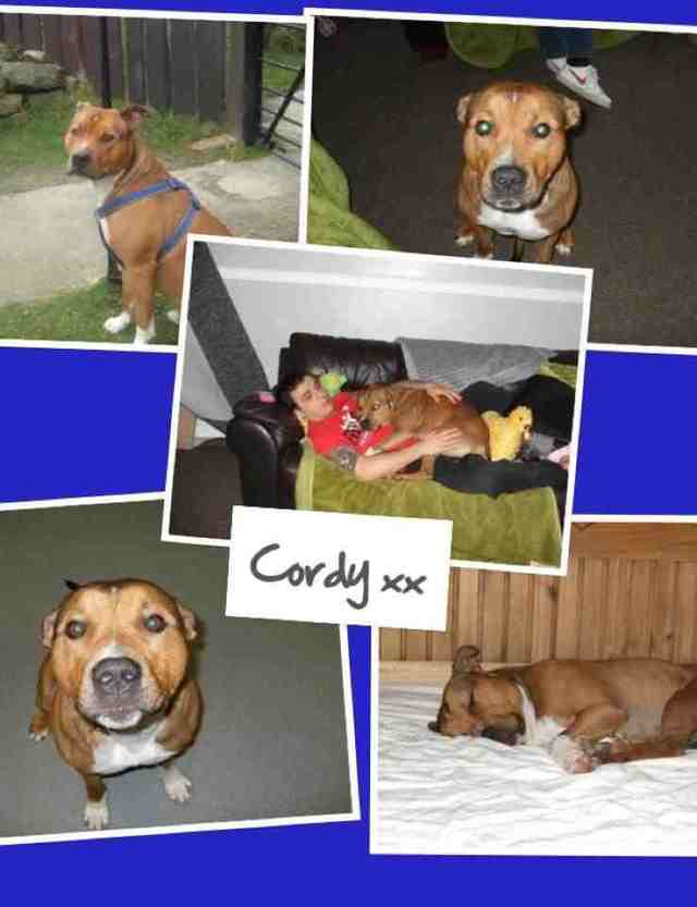 SAVE CORDY FROM BSL