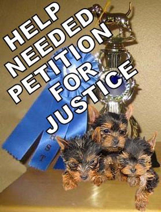 Yorkie Justice Quality Breeders HELP NEEDED