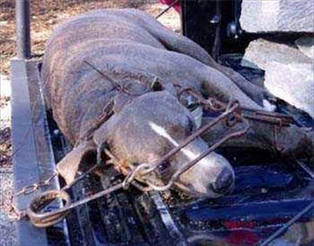 get Congresswoman Nita Lowey to end barbaric trapping