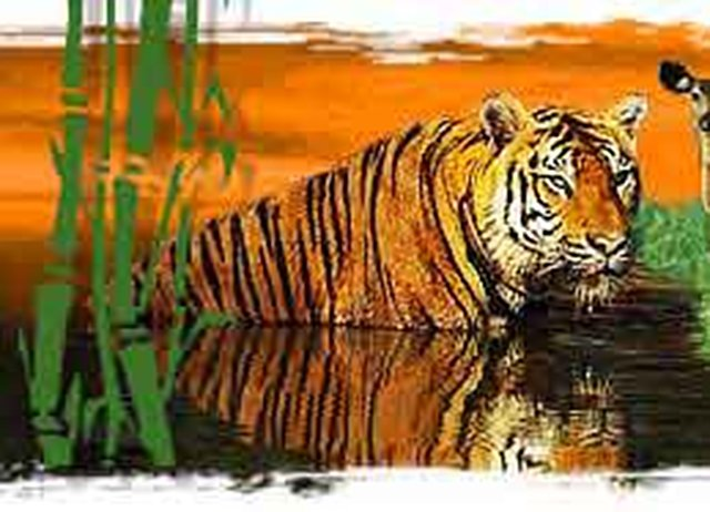 save the indian tiger