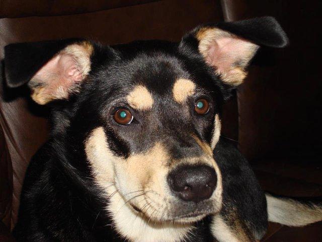 punish Princeton NJ dog killer