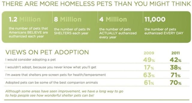 I pledge to adopt my next pet