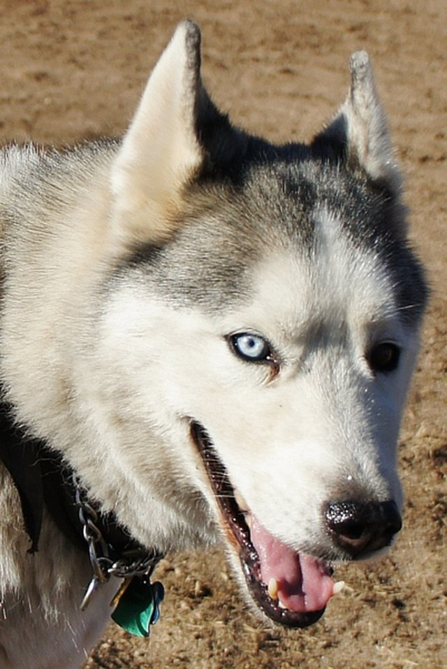 HELP SAVE WOLF's LIFE!