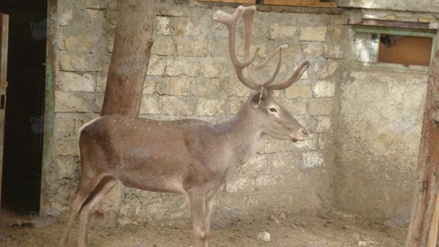 "Stop,""Baku Zoo"" ! Animals suffer !"