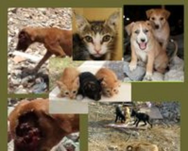 END Animal suffering in Oman, and plea for it's first Animal shelter!