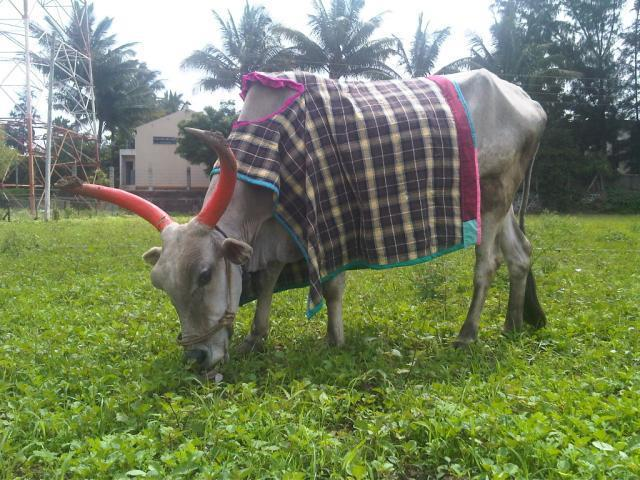 Sponsor Ingrid's Birthday Wish for Working Animals