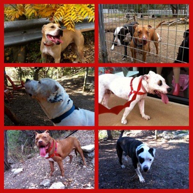 help Reunion Rescue this Christmas