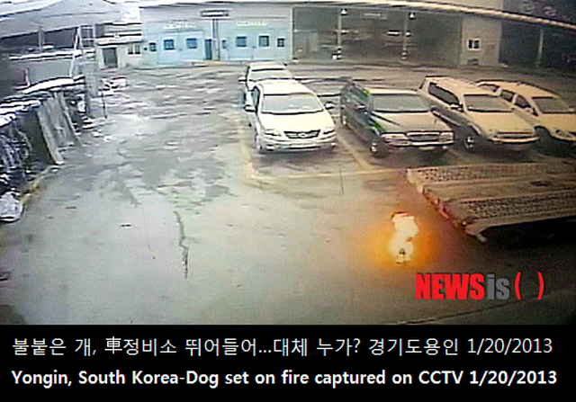 get South Korea to stop burning dogs and cats alive