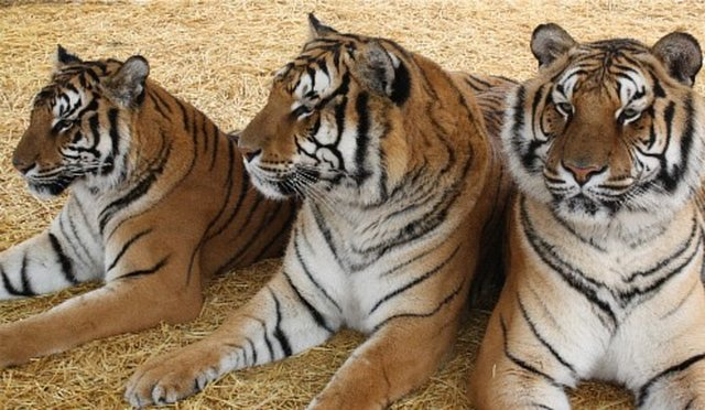 Help us fund re-homing animals that are homeless from exotic bans