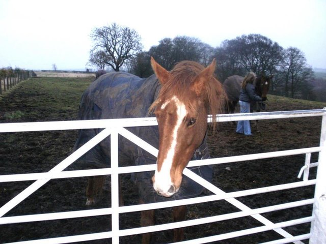 Racehorse Rescue Centre Urgent Appeal