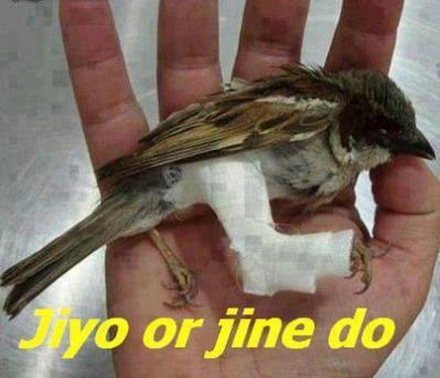 Save The Sparrow