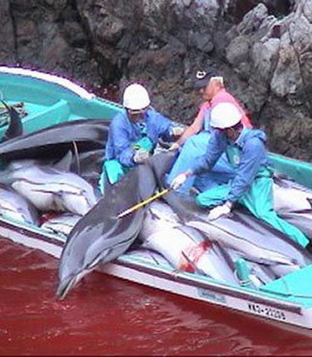 Stop The Taiji Dolphin Hunt