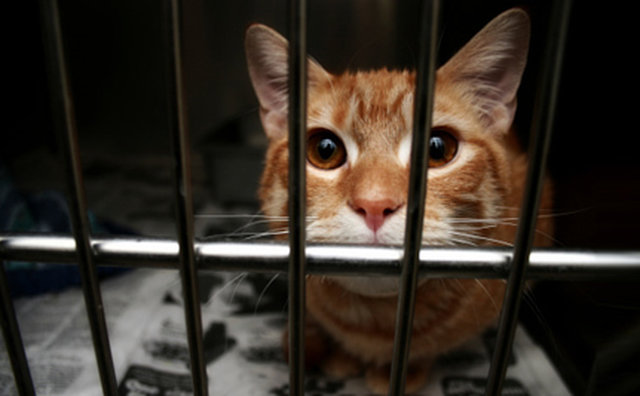 HELP NEED YOUR SIGN: Council finance food and veterinarians for the only shelter cats of the Tenerif