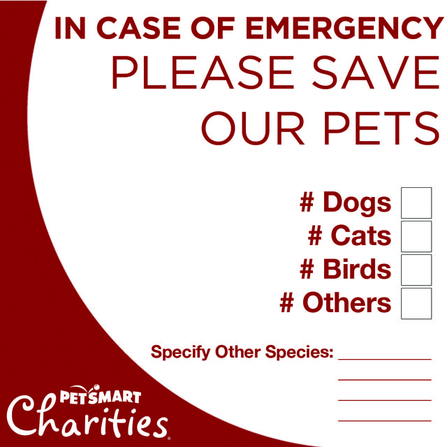 Create an emergency preparedness plan that includes my pets