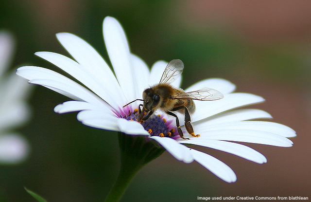 Tell the EPA to make chemical companies accountable for their bee-killing pesticides