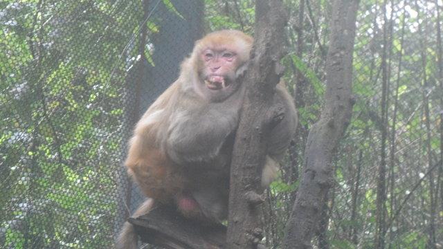 COMPRA ILEGAL DE ANIMALES PARA EL ZOOLÓGICO DE CHAPULTEPEC
