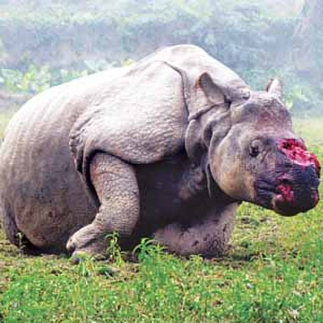 Save The One Horned Rhino