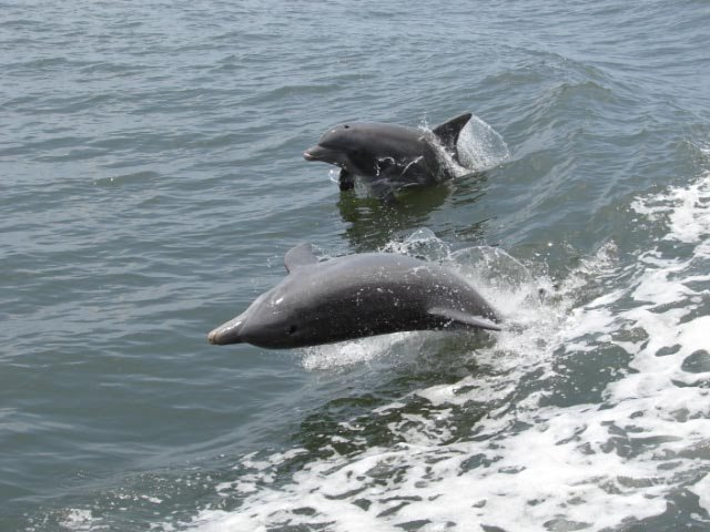 Help Stop Toxic Harmful Algae in Florida to Save Dolphins