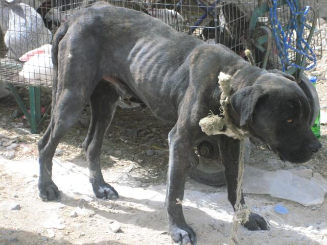 Contra el mercado de animales vivos /en el DF
