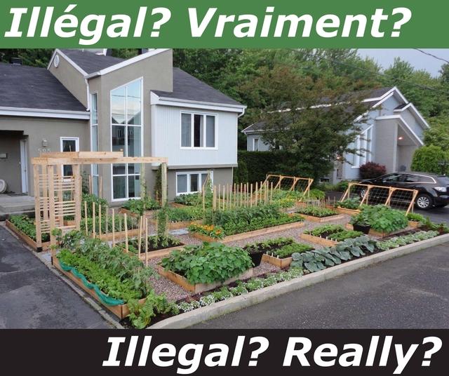 Stop the War on Front Yard Vegetable Gardens - Arrêtez la Guerre contre les Potagers sur les Cours