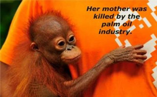 tell Dr. Oz to stop promoting palm oil
