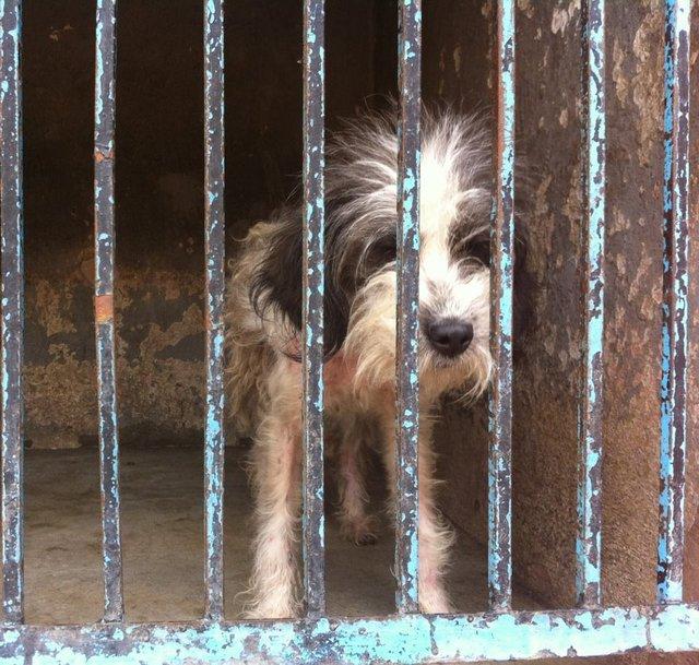 NO A LA MUERTE NI AL ATURDIMIENTO POR ELECTROCUCIÓN A ANIMALES EN ANTIRRÁBICOS DE MEXICO
