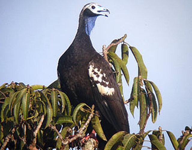 Take the Pledge to Conserve our Environment - Pledge TTBiodiversity
