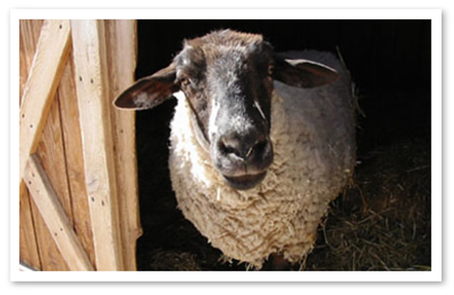 Please Help Close Breeding Farm - Expand Animal Sanctuary - Win Win!