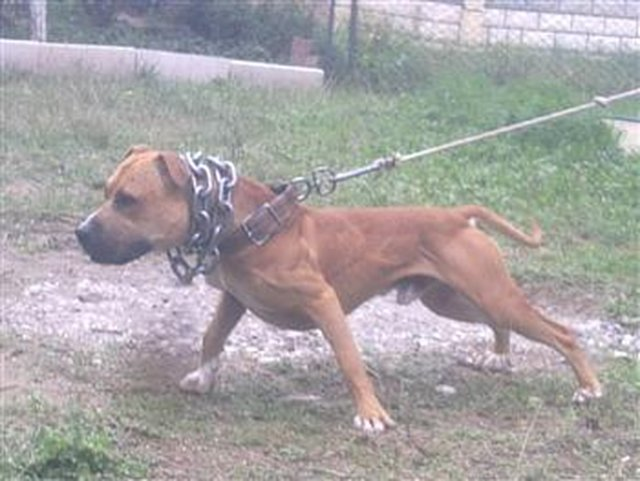 TELL FACEBOOK CLOSE DOWN PITBULL KENNELS (GAME DOGS)!!