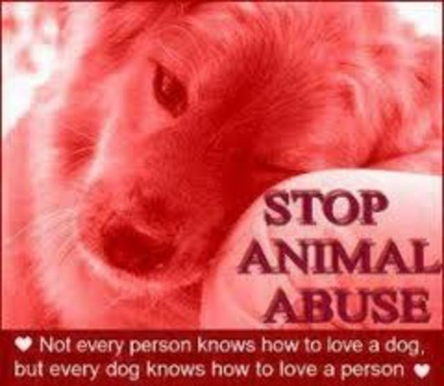 STOP THE ABUSE OF ANIMALS!!!