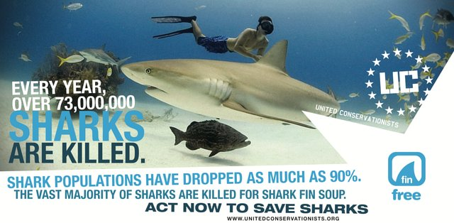ban shark fin products in US & save sharks from extinction.