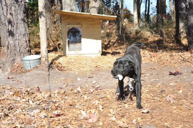 20 Doghouses for 20 Dogs Without Shelter