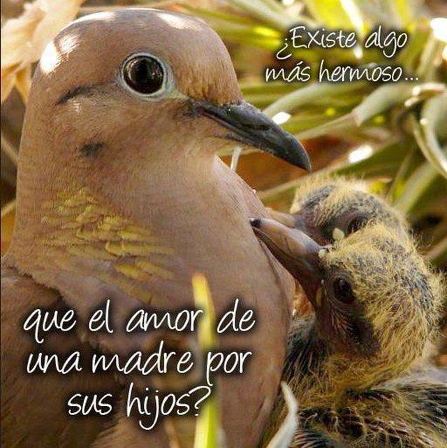 stop massacre of pigeons in cities