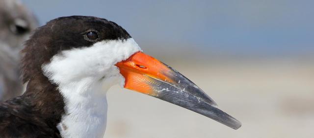 Protect New Jersey's Rare Wildlife