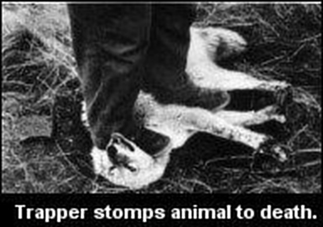 see our 'No Compromise' demand to ban traps!