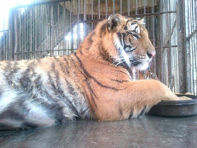 PARAGUAY PUEDE entre todos podemos  a favor de los tigres