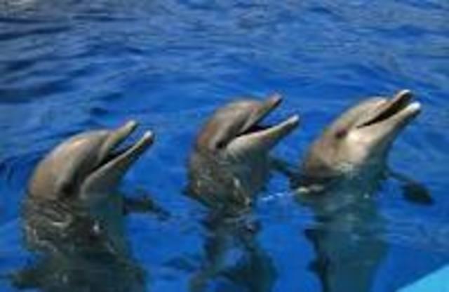 ayudemos a los delfines