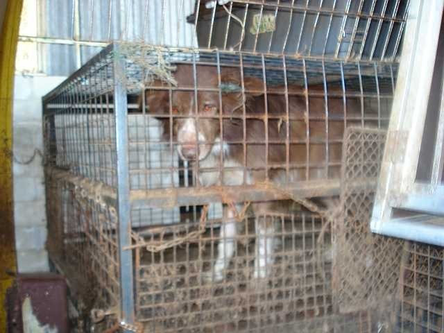 Removal of st gaudent dogs from the owner