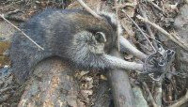 get Congresswoman Nita Lowey to end barbaric trapping