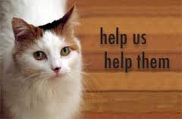 Help Relieve Animals from Cruelty!