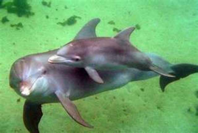 save the dolphins of Taiji
