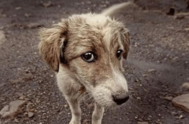 stop the deportation of stray dogs in Germany