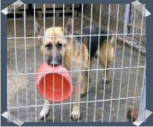 save dogs in Greece