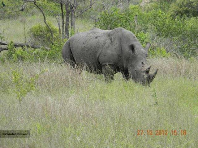 Ask CITES to bring a SUSPENSION OF TRADE against South Africa and Swaziland for the White Rhinoceros