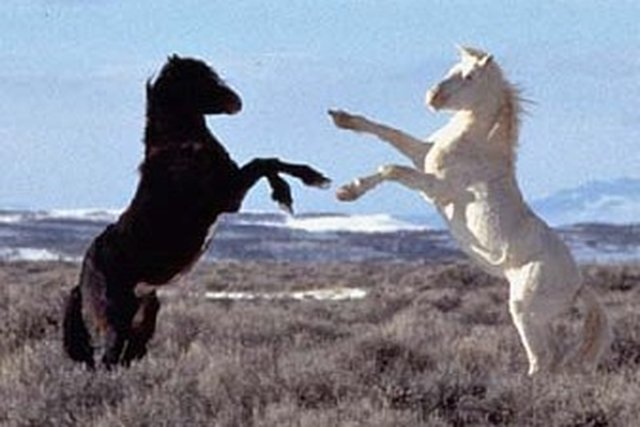 save the wild horses with Lord of The Rings' Blanco