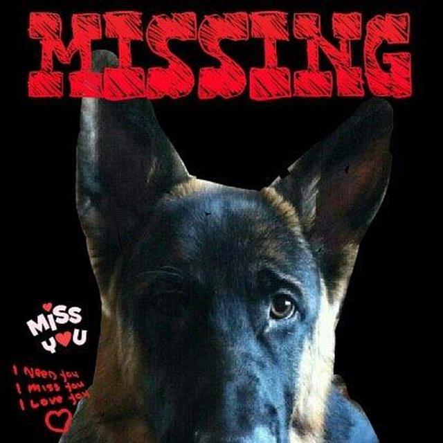 help bring Rex home