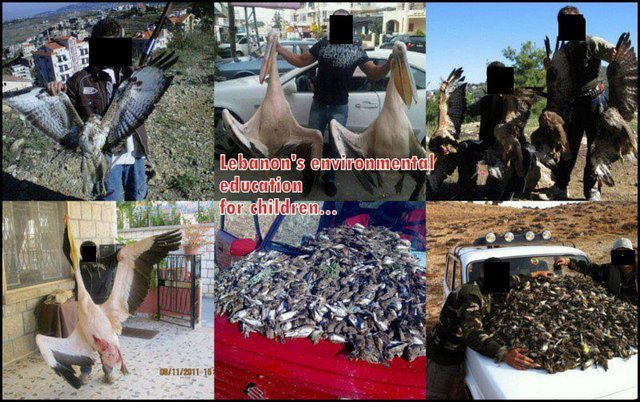 ENFORCE Hunting Laws in Lebanon ...STOP the Massacre !!