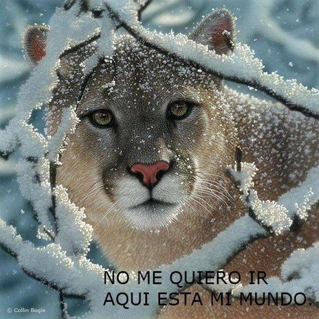 Contra la política de exterminio de animales callejeros en Chile
