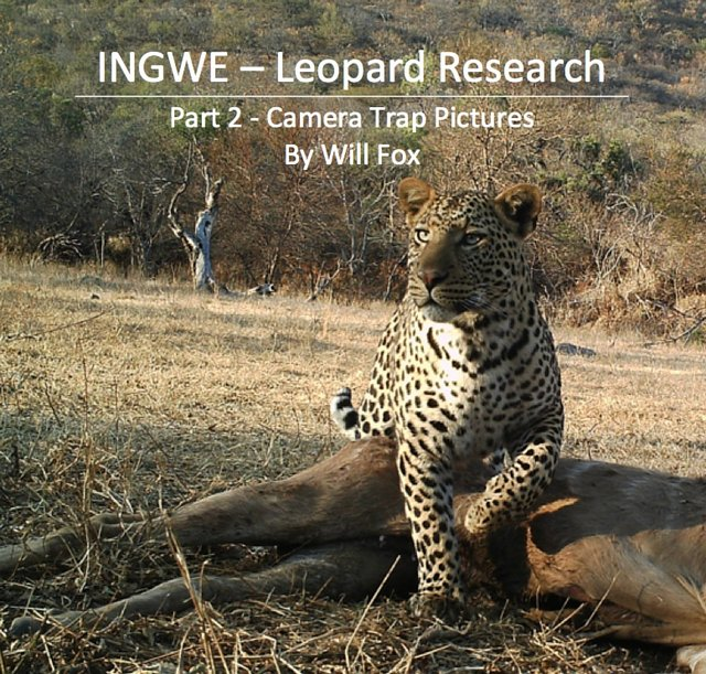 Leopard hunting permits issued - we need to stop the killing